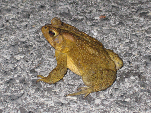 Frog/toad?