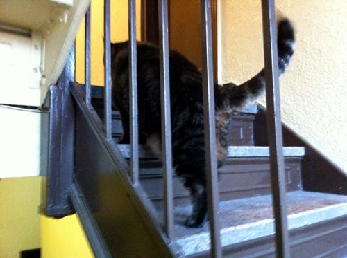 Kitty stairs