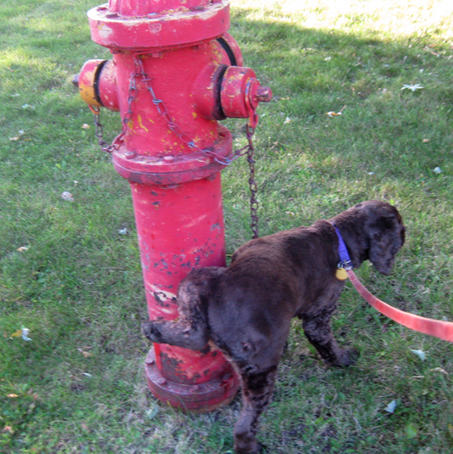 Max and hydrant